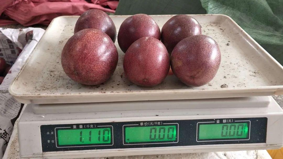 紫色的神奇果–维C之王台农1号百香果